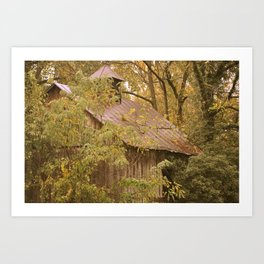 Shed in Woods Art Print