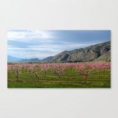 okanagan cherry blossoms  Canvas Print