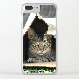 Box Kitty (Lanai Cat Sanctuary) Clear iPhone Case