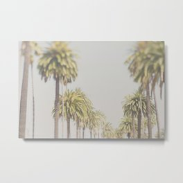 palm trees ... Metal Print