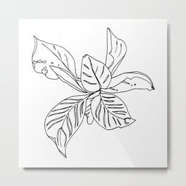 PLANT PORTRAITS - ORNATA PINSTRIPE - COOPER  AND COLLEEN Metal Print