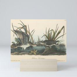 Vintage Print - Birds of America (1840) - Solitary Sandpiper Mini Art Print