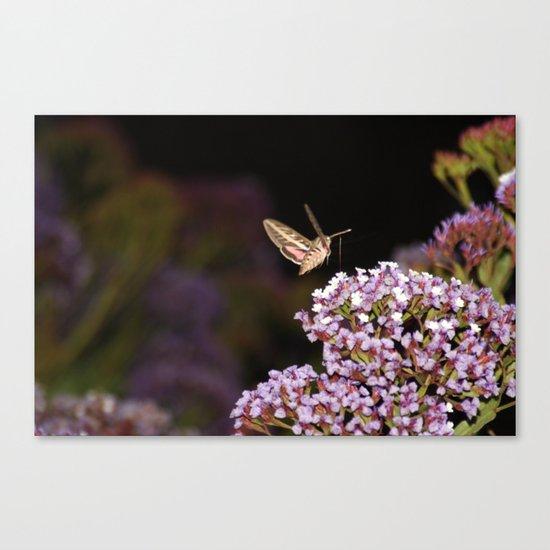 Hummingbird Hawk Moth Canvas Print