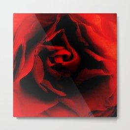 Passionate rose Metal Print