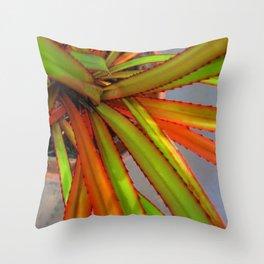 Baby Srew Pine Throw Pillow