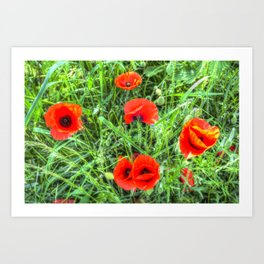 Poppy's Of Summer Art Print
