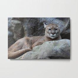 Pissy Feline Metal Print