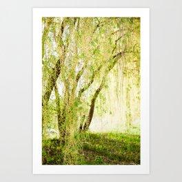 Spring Willow Art Print