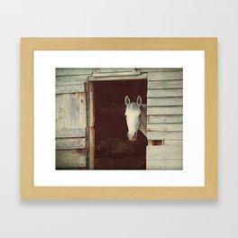 Peekaboo Mare // Horse Framed Art Print
