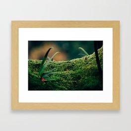 Japanese Moss Framed Art Print