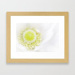 White Anemone  Framed Art Print