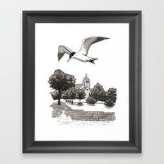 Caspian Tern at Promontory Point Framed Art Print