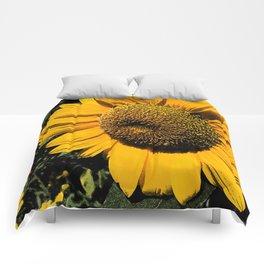 Sunflower Fresco Comforters
