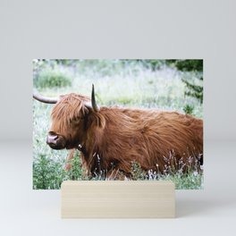 Scottish Highland Cow Mini Art Print
