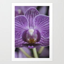 BR Orchid 001 Art Print