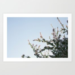 Blooming pink Art Print
