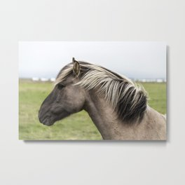 Pony in Profile Metal Print