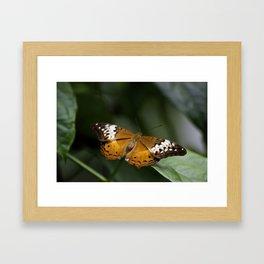 Orange Lacewing Framed Art Print