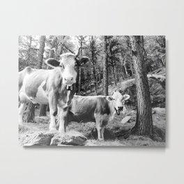 Swiss Alps Mountain Cows Metal Print