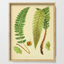 Vintage Botanical illustration, 1916 (Fern) Serving Tray