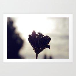 Backlit Art Print