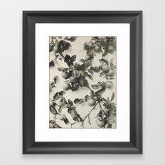 Vintage Apple Botanical Framed Art Print