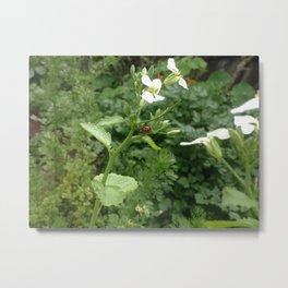Ladybug on Radish Flower Metal Print