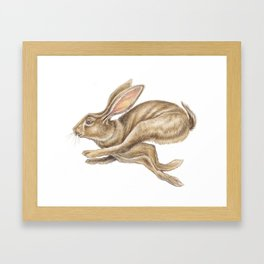 Hare Watercolour - Nursery Art by Magda Opoka Framed Art Print