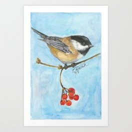 Chickadee On Berry Branch Art Print