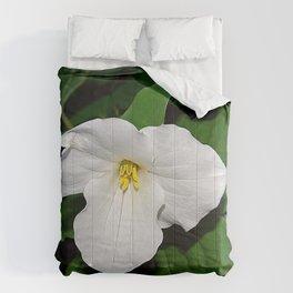 Trillium in the spotlight Comforters
