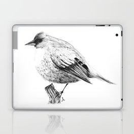 Pajaro Laptop & iPad Skin