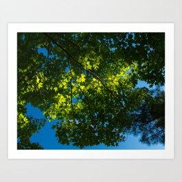 Sunlight and Translucent Green Art Print