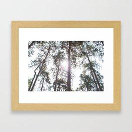 Through the branches Framed Art Print