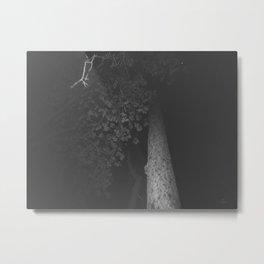 166 | bastrop state park Metal Print