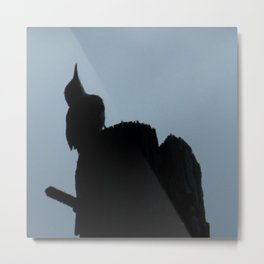 Woodpecker Checking the Weather Metal Print