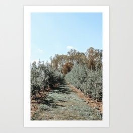 Apple Fields Art Print