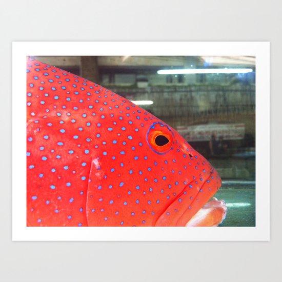 Fish Up Close Art Print