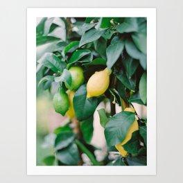 Lemons on A Lemon Tree Art Print