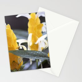 Longwood Gardens Autumn Series 279 Stationery Cards