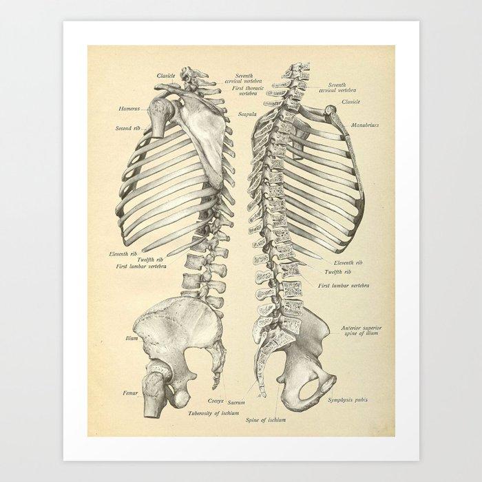 Human Spine Anatomy Golfclub