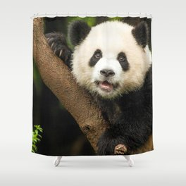 Magnificent Panda Bear Sitting On Tree Branch Observing Camera Close Up Ultra HD Shower Curtain