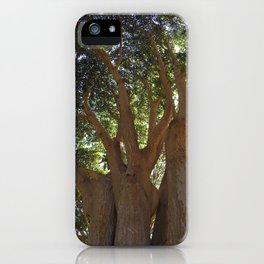 Three Large Tree Trunks With Afternoon Sunlight Filtering Through Green Leaves iPhone Case