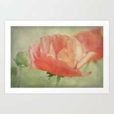 Big Poppy digital Paintings Art Print
