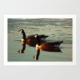 Summer Geese Art Print