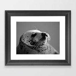 Howth Harbour Seal Framed Art Print