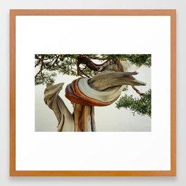Twisted Bonsai Framed Art Print
