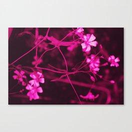 hot pink flow Canvas Print