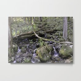 Forest 02 Metal Print