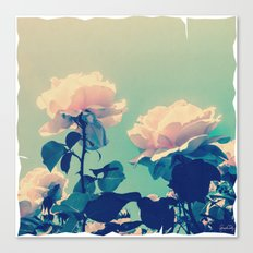 Soft Baby Pink Roses with Mint Blue Sky Backgroud Canvas Print