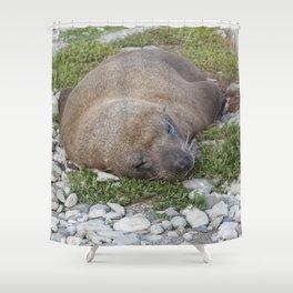 Fur Seal sleeping Shower Curtain